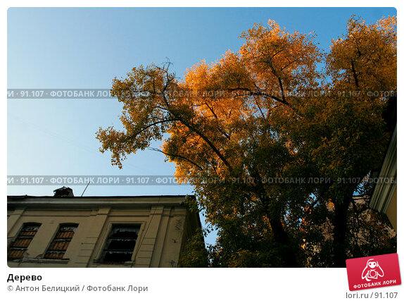 Дерево, фото № 91107, снято 30 сентября 2007 г. (c) Антон Белицкий / Фотобанк Лори