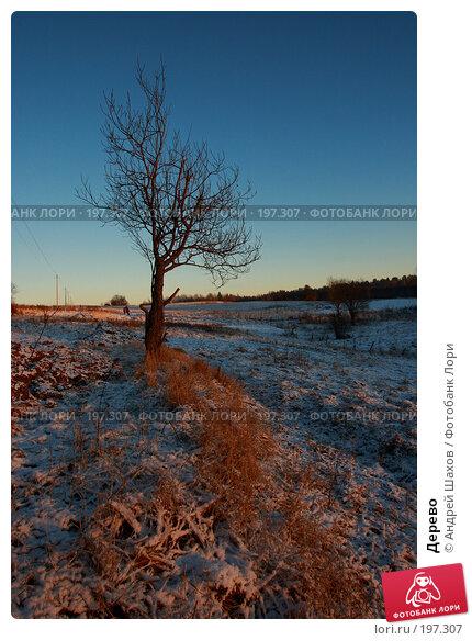 Дерево, фото № 197307, снято 4 января 2008 г. (c) Андрей Шахов / Фотобанк Лори