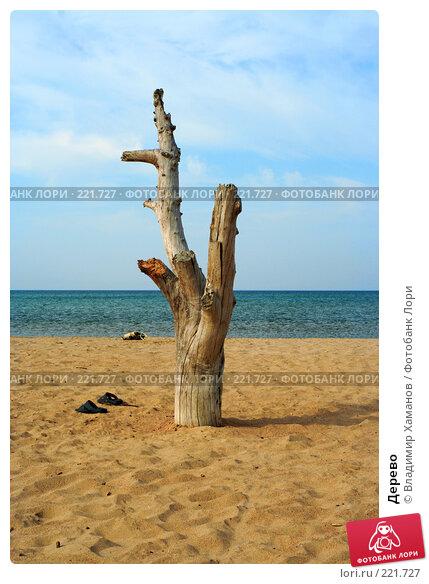 Дерево, фото № 221727, снято 1 августа 2005 г. (c) Владимир Хаманов / Фотобанк Лори