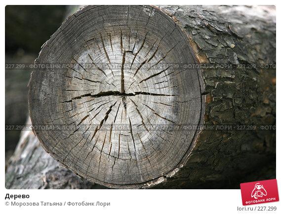 Дерево, фото № 227299, снято 24 мая 2007 г. (c) Морозова Татьяна / Фотобанк Лори
