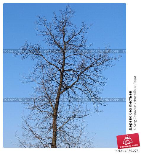 Дерево без листьев, фото № 130275, снято 11 апреля 2005 г. (c) Serg Zastavkin / Фотобанк Лори