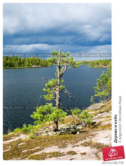Дерево и небо, фото № 82775, снято 18 августа 2007 г. (c) Argument / Фотобанк Лори