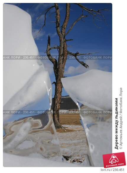 Дерево между льдинами, фото № 230451, снято 5 марта 2007 г. (c) Артемьев Андрей / Фотобанк Лори