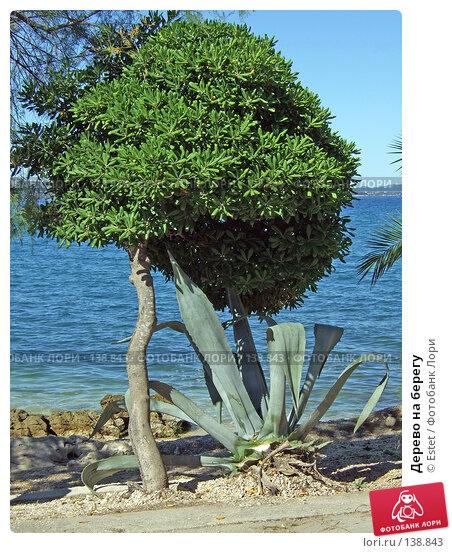 Купить «Дерево на берегу», фото № 138843, снято 5 июля 2007 г. (c) Estet / Фотобанк Лори