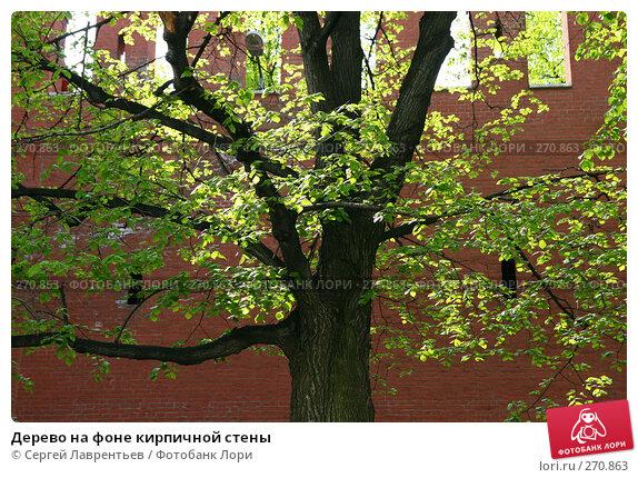 Дерево на фоне кирпичной стены, фото № 270863, снято 2 мая 2008 г. (c) Сергей Лаврентьев / Фотобанк Лори