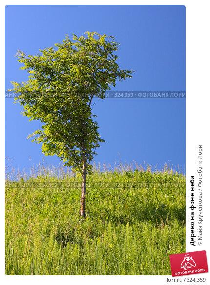 Дерево на фоне неба, фото № 324359, снято 11 июня 2008 г. (c) Майя Крученкова / Фотобанк Лори