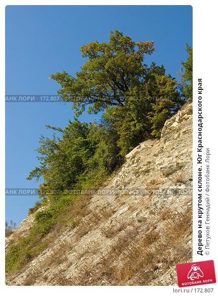 Купить «Дерево на крутом склоне. Юг Краснодарского края», фото № 172807, снято 7 августа 2007 г. (c) Петухов Геннадий / Фотобанк Лори