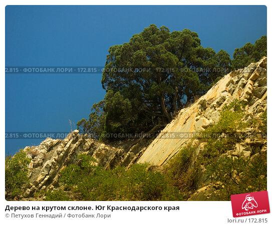 Дерево на крутом склоне. Юг Краснодарского края, фото № 172815, снято 9 августа 2007 г. (c) Петухов Геннадий / Фотобанк Лори