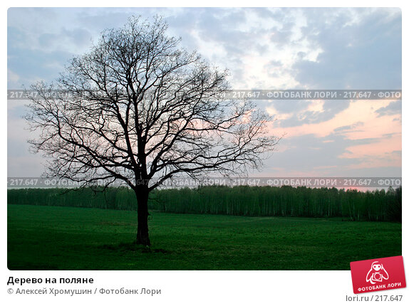 Дерево на поляне, фото № 217647, снято 6 мая 2006 г. (c) Алексей Хромушин / Фотобанк Лори