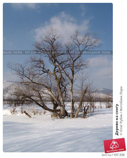 Дерево на снегу, фото № 197339, снято 5 февраля 2008 г. (c) Олег Рубик / Фотобанк Лори
