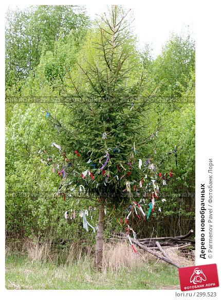 Купить «Дерево новобрачных», фото № 299523, снято 11 мая 2008 г. (c) Parmenov Pavel / Фотобанк Лори