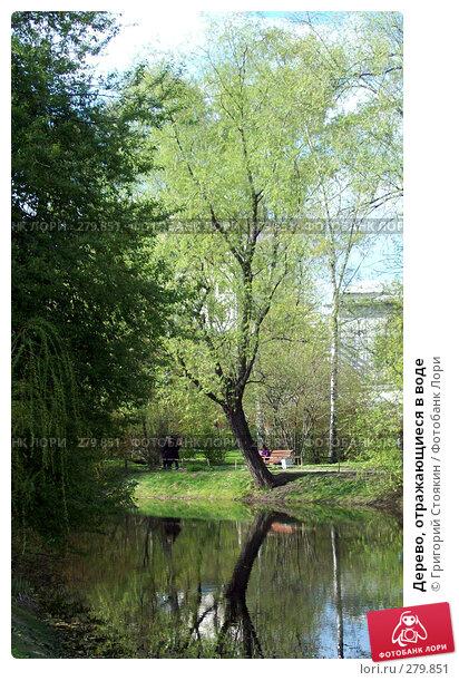 Дерево, отражающиеся в воде, фото № 279851, снято 20 января 2007 г. (c) Григорий Стоякин / Фотобанк Лори