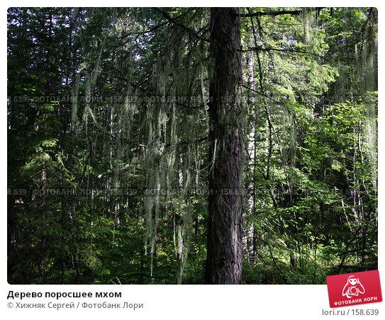 Купить «Дерево поросшее мхом», фото № 158639, снято 4 июля 2006 г. (c) Хижняк Сергей / Фотобанк Лори