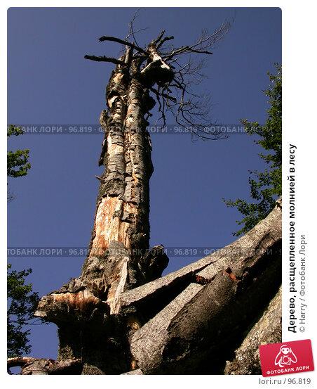Купить «Дерево, расщепленное молнией в лесу», фото № 96819, снято 24 августа 2007 г. (c) Harry / Фотобанк Лори