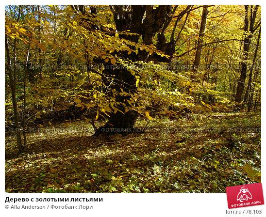 Дерево с золотыми листьями, фото № 78103, снято 25 октября 2006 г. (c) Alla Andersen / Фотобанк Лори