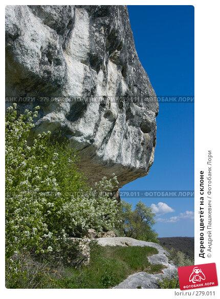 Дерево цветёт на склоне, фото № 279011, снято 4 мая 2007 г. (c) Андрей Пашкевич / Фотобанк Лори