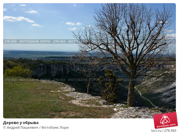 Дерево у обрыва, фото № 278943, снято 28 апреля 2007 г. (c) Андрей Пашкевич / Фотобанк Лори