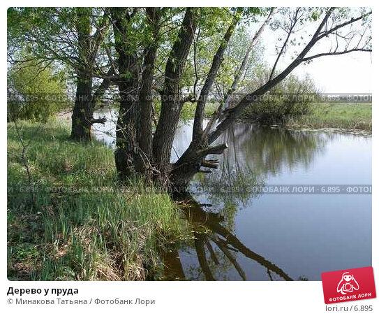 Купить «Дерево у пруда», фото № 6895, снято 21 апреля 2018 г. (c) Минакова Татьяна / Фотобанк Лори