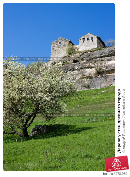 Дерево у стен древнего города, фото № 278939, снято 28 апреля 2007 г. (c) Андрей Пашкевич / Фотобанк Лори
