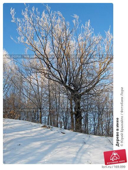 Дерево в инее, фото № 169099, снято 14 января 2006 г. (c) Юрий Брыкайло / Фотобанк Лори
