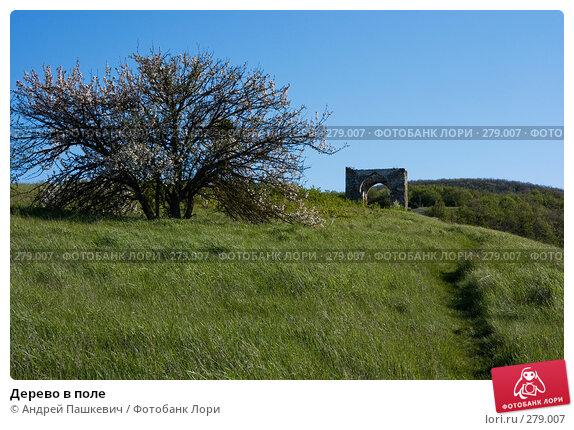 Дерево в поле, фото № 279007, снято 3 мая 2007 г. (c) Андрей Пашкевич / Фотобанк Лори