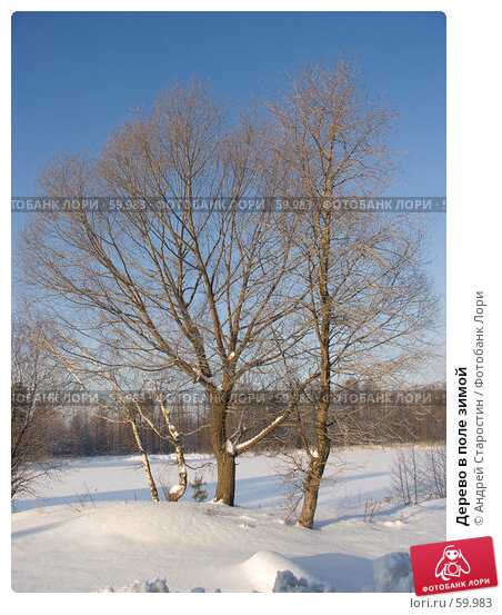 Дерево в поле зимой, фото № 59983, снято 5 января 2006 г. (c) Андрей Старостин / Фотобанк Лори