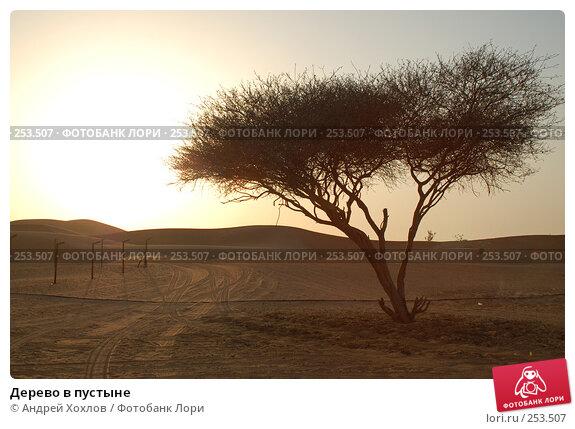 Дерево в пустыне, фото № 253507, снято 2 июня 2006 г. (c) Андрей Хохлов / Фотобанк Лори