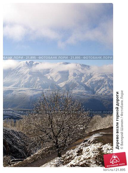 Купить «Дерево возле горной дороги», фото № 21895, снято 21 ноября 2006 г. (c) Валерий Шанин / Фотобанк Лори