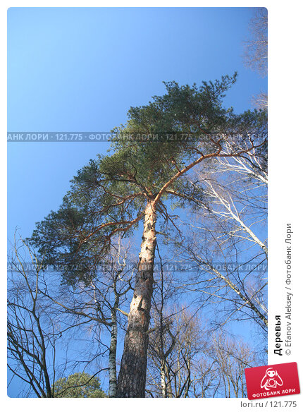 Деревья, фото № 121775, снято 25 февраля 2007 г. (c) Efanov Aleksey / Фотобанк Лори