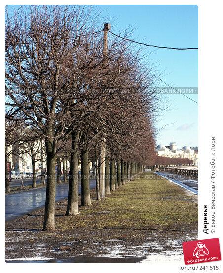Деревья, фото № 241515, снято 26 февраля 2008 г. (c) Бяков Вячеслав / Фотобанк Лори