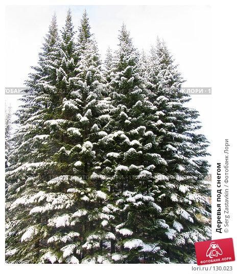 Купить «Деревья под снегом», фото № 130023, снято 23 марта 2005 г. (c) Serg Zastavkin / Фотобанк Лори