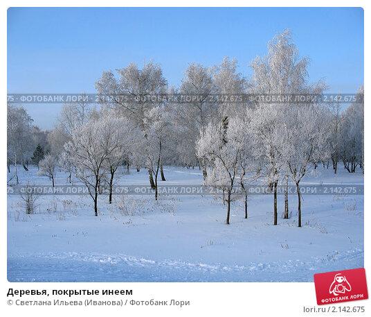 Купить «Деревья, покрытые инеем», фото № 2142675, снято 8 января 2007 г. (c) Светлана Ильева (Иванова) / Фотобанк Лори