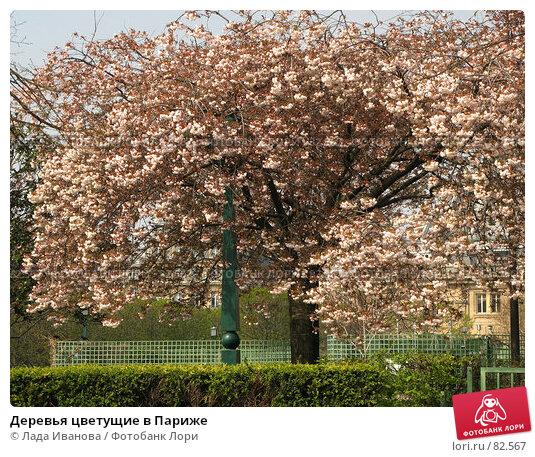 Деревья цветущие в Париже, фото № 82567, снято 7 апреля 2007 г. (c) Лада Иванова / Фотобанк Лори
