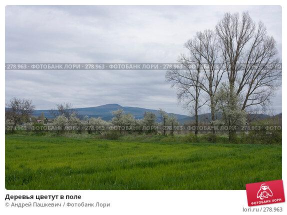 Деревья цветут в поле, фото № 278963, снято 2 мая 2007 г. (c) Андрей Пашкевич / Фотобанк Лори
