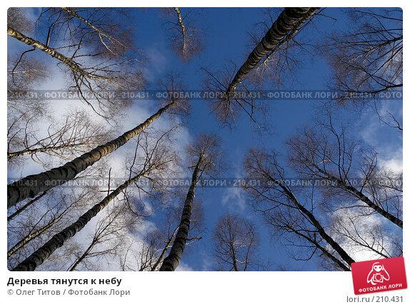 Деревья тянутся к небу, фото № 210431, снято 3 февраля 2008 г. (c) Олег Титов / Фотобанк Лори