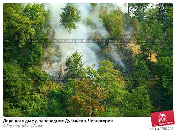 Деревья в дыму, заповедник Дурмитор, Черногория, фото № 296299, снято 28 августа 2007 г. (c) Fro / Фотобанк Лори