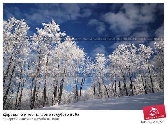Деревья в инее на фоне голубого неба, фото № 298723, снято 20 января 2008 г. (c) Сергей Сынтин / Фотобанк Лори