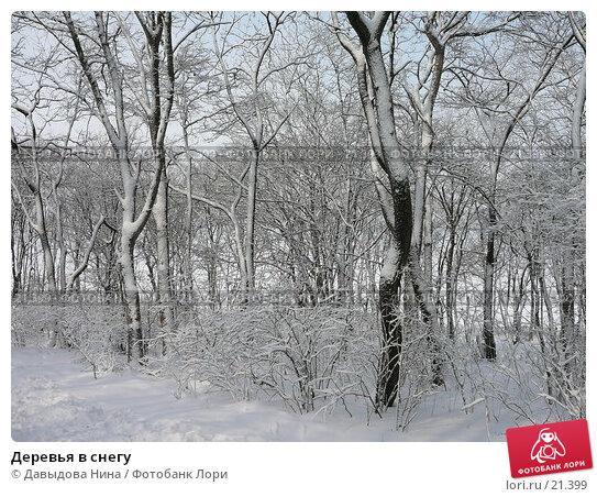 Деревья в снегу, фото № 21399, снято 31 января 2007 г. (c) Давыдова Нина / Фотобанк Лори