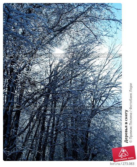 Деревья в снегу, фото № 273083, снято 30 октября 2006 г. (c) Примак Полина / Фотобанк Лори