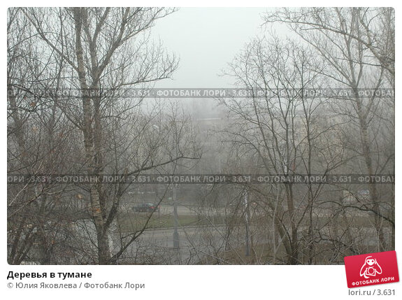 Деревья в тумане, фото № 3631, снято 10 апреля 2006 г. (c) Юлия Яковлева / Фотобанк Лори