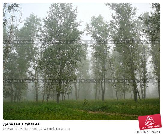 Деревья в тумане, фото № 229251, снято 1 июля 2007 г. (c) Михаил Коханчиков / Фотобанк Лори