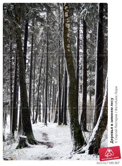 Деревья в зимнем лесу, фото № 149367, снято 14 октября 2007 г. (c) Сергей Пестерев / Фотобанк Лори