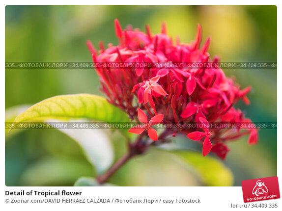 Detail of Tropical flower. Стоковое фото, фотограф Zoonar.com/DAVID HERRAEZ CALZADA / easy Fotostock / Фотобанк Лори