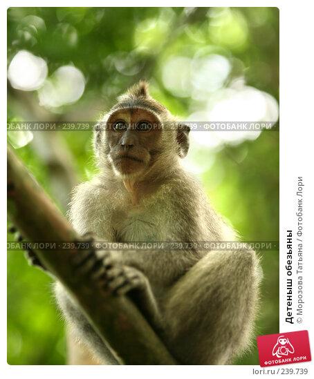 Детеныш обезьяны, фото № 239739, снято 24 февраля 2008 г. (c) Морозова Татьяна / Фотобанк Лори