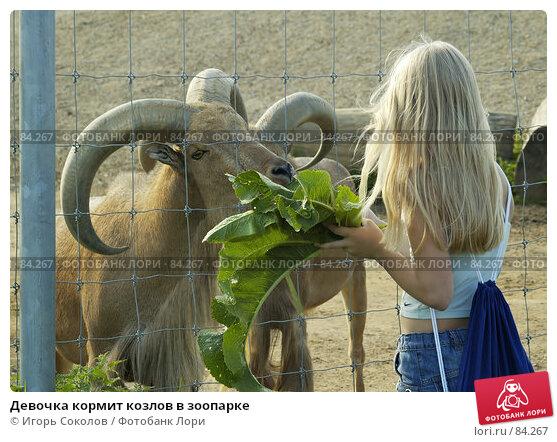 Девочка кормит козлов в зоопарке, фото № 84267, снято 26 мая 2017 г. (c) Игорь Соколов / Фотобанк Лори