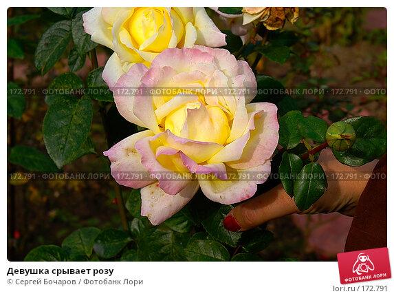 Купить «Девушка срывает розу», фото № 172791, снято 29 сентября 2007 г. (c) Сергей Бочаров / Фотобанк Лори