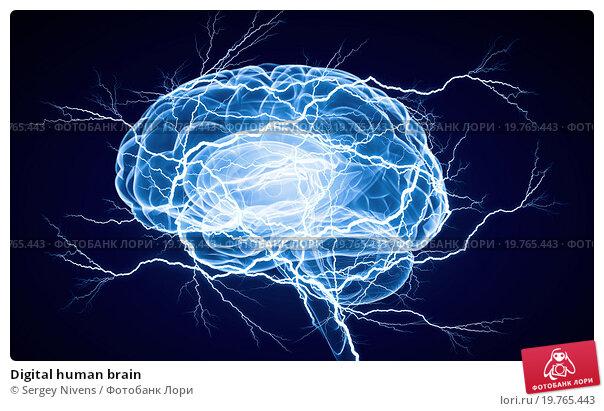Купить «Digital human brain», иллюстрация № 19765443 (c) Sergey Nivens / Фотобанк Лори