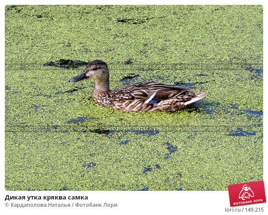 Дикая утка кряква самка, фото № 149215, снято 14 июля 2007 г. (c) Кардаполова Наталья / Фотобанк Лори