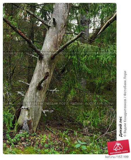 Дикий лес, фото № 157199, снято 23 июля 2017 г. (c) Вадим Кондратенков / Фотобанк Лори