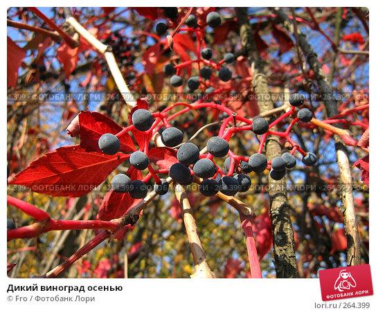 Дикий виноград осенью, фото № 264399, снято 2 октября 2005 г. (c) Fro / Фотобанк Лори